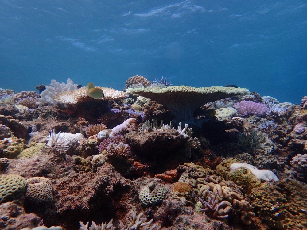 水納島_サンゴ